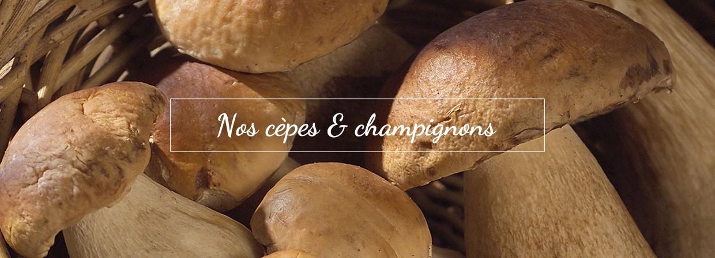 Cèpes et champpignons